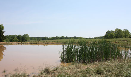 15 Acres For Sale With A Pond In Tennessee Richey Mini Farms