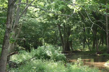 Byrd Creek at the bottom of this farm.  The north boundary is 20 yards beyond the creek